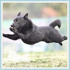飛行犬撮影会の写真が届く