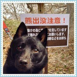 遊歩道で熊出没注意の看板に遭遇!
