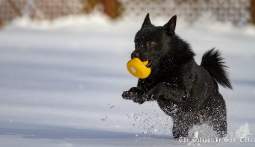 サムと初雪散歩
