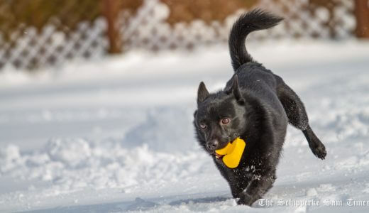 サムと雪遊び